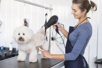 Dog Vaccination Certificate Template New How To Start A Mobile Dog Grooming Salon