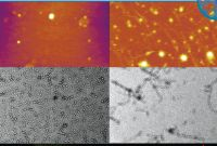 Qa Weekly Status Report Template New Tissue Specific Characterization Of Mitochondrial Branched Chain