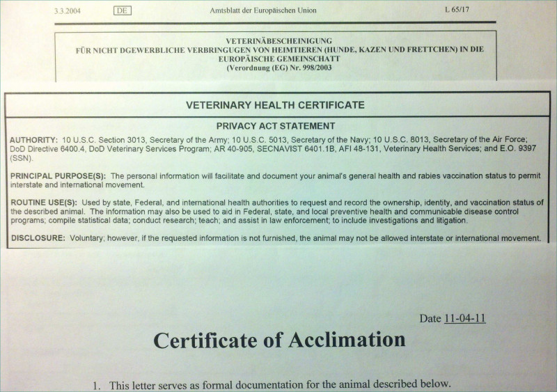 Veterinary Health Certificate Template New Fit to Fly Certificate Dog Template Liveable Fit to Travel