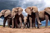 Blank Elephant Template Awesome Elephants Blank Template Imgflip
