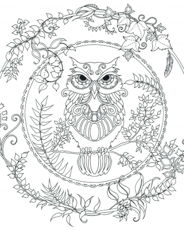 Blank Face Template Preschool Unique Coloring Pages Free Printable Coloring Pictures Of Owls