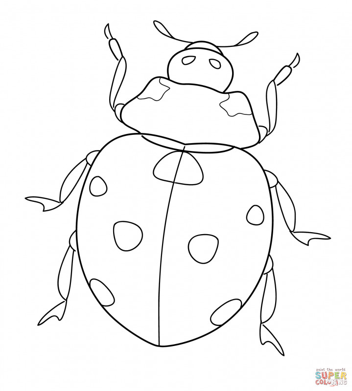 Blank Ladybug Template New Ladybug Coloring Pages Free Coloring Pages