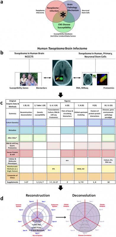 Folder Spine Labels Template Unique Toxoplasma Modulates Signature Pathways Of Human Epilepsy