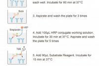 Free Msds Label Template Unique Tgf I²1transforming Growth Factor Beta 1 Elisa Kit Elabscience