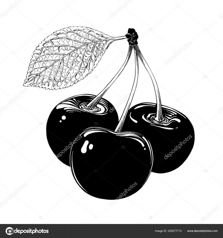 Free Printable Vintage Label Templates New Hand Drawn Sketch Of Cherry In Black Isolated On White