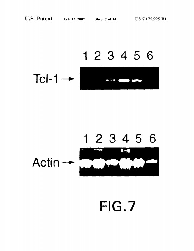 Pill Bottle Label Template New Us7175995b1 Tcl 1 Protein And Related Methods Google Patents