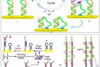 Universal Label Templates New Sensors Free Full Text Review Of Electrochemical Dna