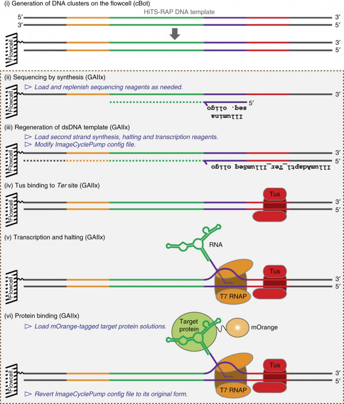 4th Of July Menu Template Awesome Quantitative Assessment Of Rna Protein Interactions With